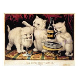 Los tres gatitos codiciosos en el curtidor Ives de Fotografía