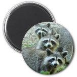Los tres mapaches imán redondo 5 cm