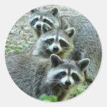 Los tres mapaches pegatina redonda