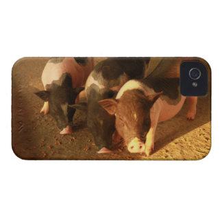 Los tres pequeños cerdos iPhone 4 funda