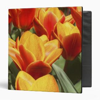 Los tulipanes abundan en los jardines de Keukenhof