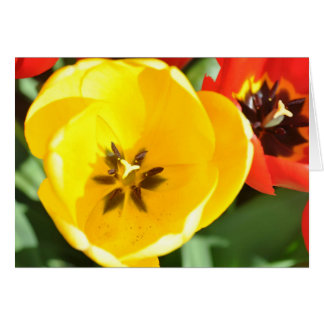Los tulipanes amarillos para arriba se cierran con tarjeta de felicitación