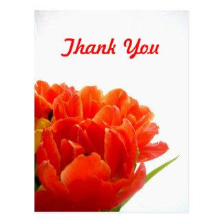 Los tulipanes anaranjados le agradecen las postale postales