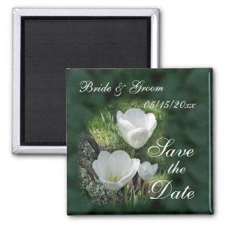 Los tulipanes blancos que se casan ahorran la fec iman para frigorífico
