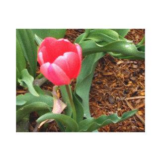 Los tulipanes del jardín envolvieron la decoración impresion en lona