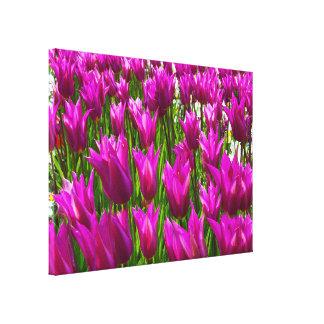 Los tulipanes púrpuras en Keukenhof, Holanda Impresión En Lienzo