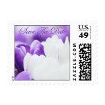 Los tulipanes púrpuras y blancos - ahorre la fecha sellos