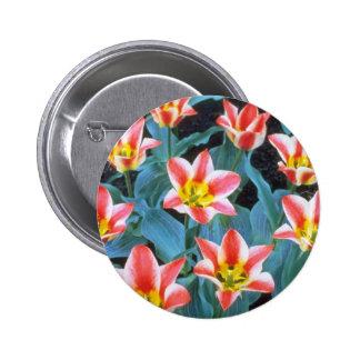"""Los tulipanes rojos de Greigee, """"Addis"""" florecen Pin"""