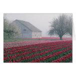 Los tulipanes rojos y rosados saludan el día en un tarjeta de felicitación