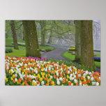 Los tulipanes y el camino, Keukenhof cultiva un hu Posters