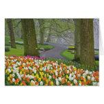 Los tulipanes y el camino, Keukenhof cultiva un hu Felicitaciones