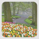 Los tulipanes y el camino, Keukenhof cultiva un Calcomanías Cuadradas Personalizadas