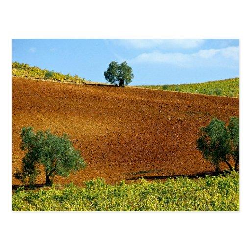 Los viñedos acercan a Montilla, Andalucía, España  Postales
