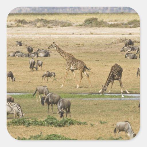 Los Wildebeests, las cebras y las jirafas Pegatina Cuadrada