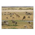 Los Wildebeests, las cebras y las jirafas recolect Tarjeta De Felicitación