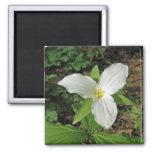 Los Wildflowers pueden 2008_0033a Imán De Frigorifico