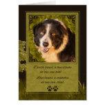 Loss of a Dog Border Collie Pet Sympathy Card