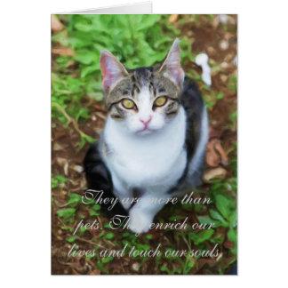 Loss of Cat Card