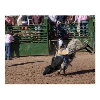 Lost Dutchman Bull Riding Postcard