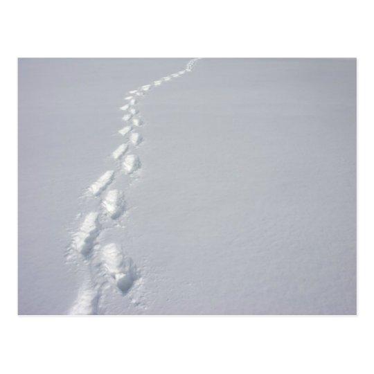 Lost Footprints Postcard