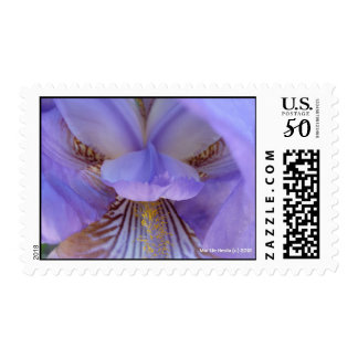 Lost in a Dream Postage
