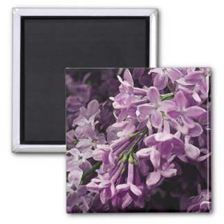 Lost in Lilac 2 Inch Square Magnet