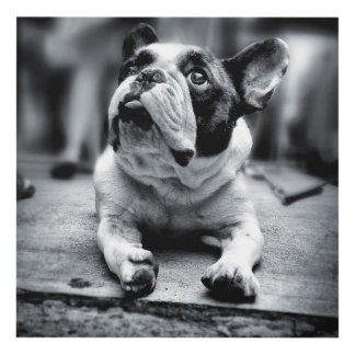 Lost In The Crowd -  A Lil' French Bulldog Waits Panel Wall Art