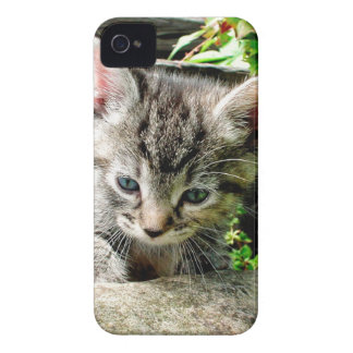 Lost Kitten iPhone 4 Case-Mate Case