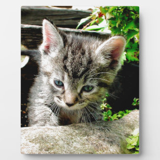 Lost Kitten Plaque