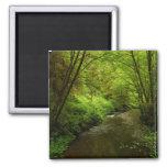 Lost Man Creek I at Redwood National Park Magnet