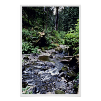 Lost Man Creek - Redwood National Park Poster