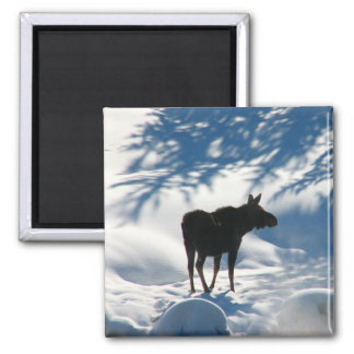 Lost Moose 2 Inch Square Magnet