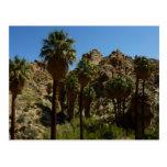 Lost Palms Oasis at Joshua Tree National Park Postcard