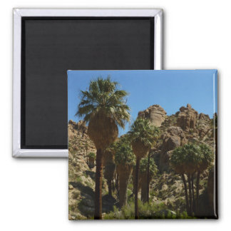 Lost Palms Oasis I at Joshua Tree National Park 2 Inch Square Magnet
