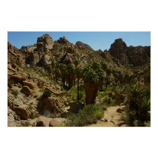 Lost Palms Oasis II at Joshua Tree National Park Poster