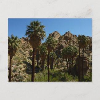 Lost Palms Oasis Postcard postcard