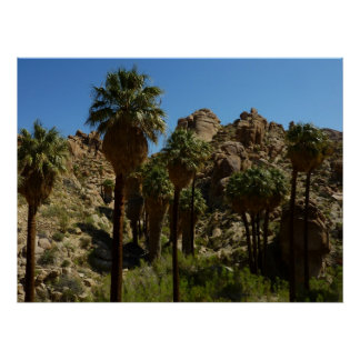 Lost Palms Oasis Print