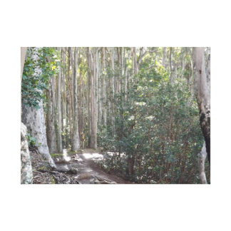 Lost Trail Stretched Canvas Prints