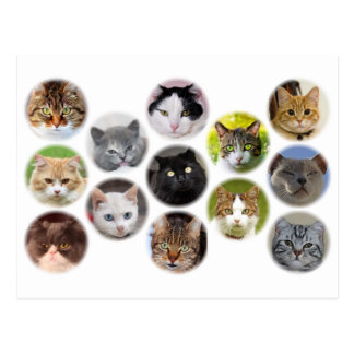Lot of cats card