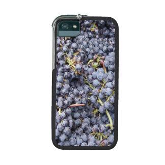 Lote de la uva