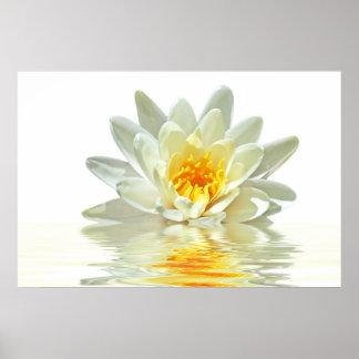 loto blanco que flota en agua póster