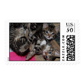 Lots 'o' Kittens! Postage