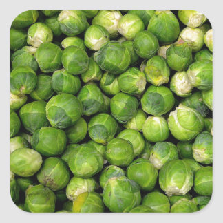 Lots of Brussels Sprouts Square Sticker