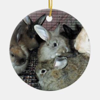 Lots of Bunny Rabbits Real Animal Photo Ceramic Ornament