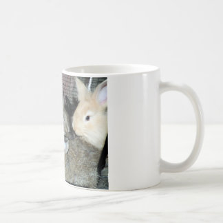 Lots of Bunny Rabbits Real Animal Photo Coffee Mug