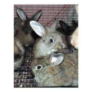 Lots of Bunny Rabbits Real Animal Photo Letterhead
