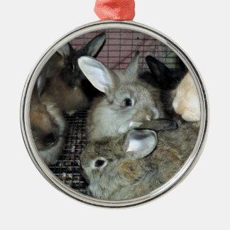 Lots of Bunny Rabbits Real Animal Photo Metal Ornament