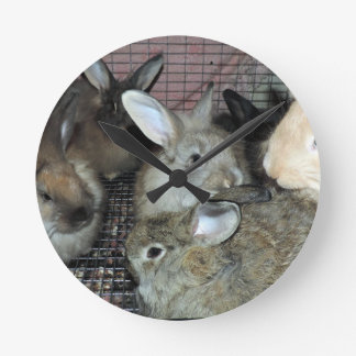Lots of Bunny Rabbits Real Animal Photo Round Clock