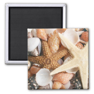 Lots of Colorful Seashells 2 Inch Square Magnet