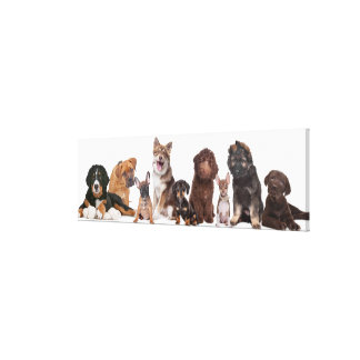 Lots Of Puppies Canvas Print